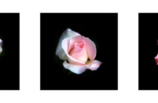 021 / Triptyque de Roses