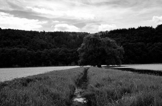 T041 / Au Bout du Chemin