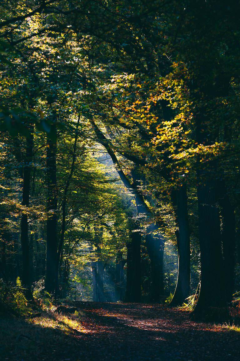 129 / Eclairages Naturels