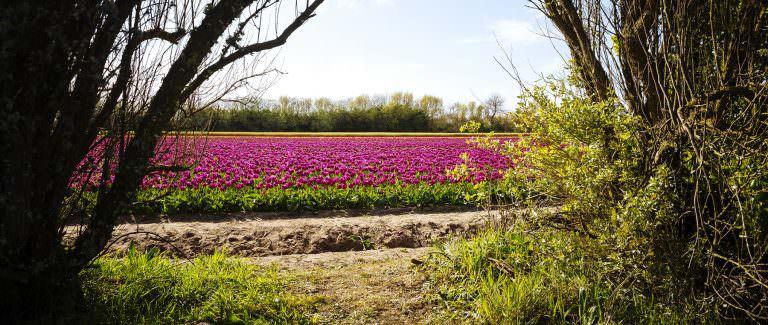 Des Tulipes à La Torche / Avril 2019